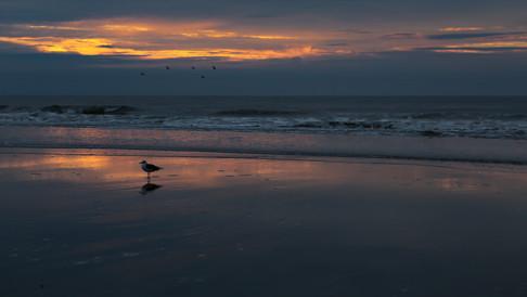 Lone Beach Gull drone photography