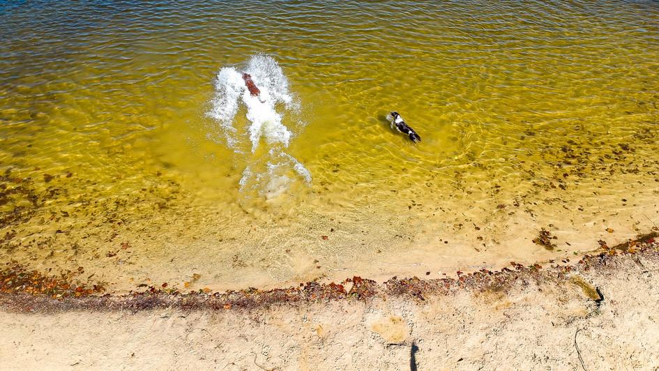 Angel Lake Dogs