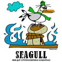 seagullbylorenzo