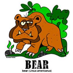 bearbylorenzo