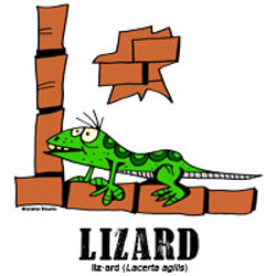 lizardbylorenzo