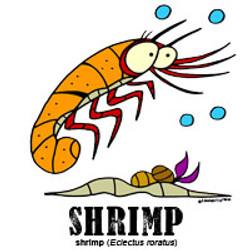 shrimpbylorenzo