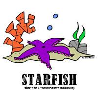starfishbylorenzo