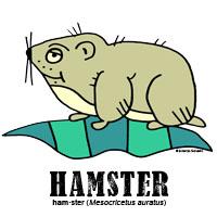 hamsterbylorenzo