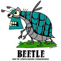 beetlebylorenzo