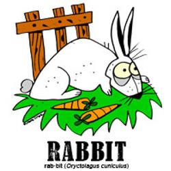 rabbitbylorenzo