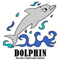 dolphinbylorenzo