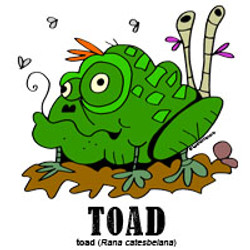 toadbylorenzo