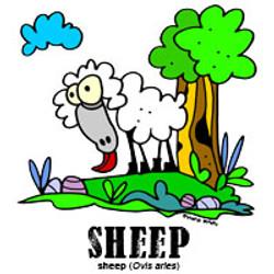 sheepbylorenzo