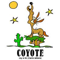 coyotebylorenzo