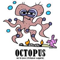 octopusbylorenzo