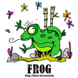 frogbylorenzo