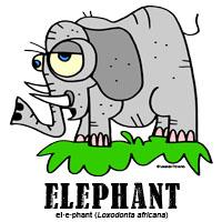 elephantbylorenzo