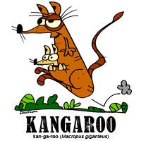 kangaroobylorenzo