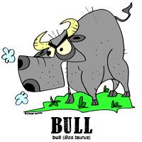 bullbylorenzo