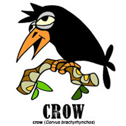 crowbylorenzo