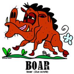 boarbylorenzo