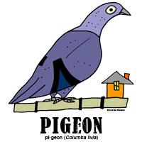 pigeonbylorenzo