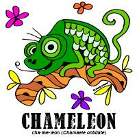 chameleonbylorenzo