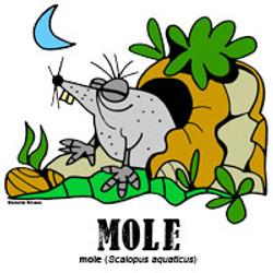 molebylorenzo