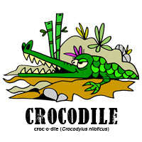 crocodilebylorenzo