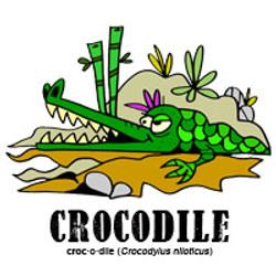 crocodilebylorenzo