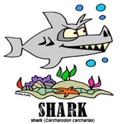 sharkbylorenzo