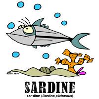 sardinebylorenzo