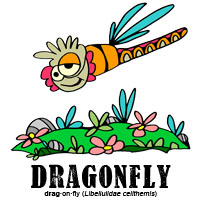 dragonflybylorenzo