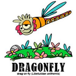 dragonflybylorenzo