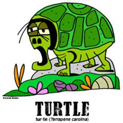 turtlebylorenzo