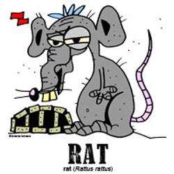 ratbylorenzo