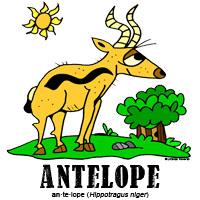 antelopebylorenzo