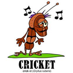 cricketbylorenzo