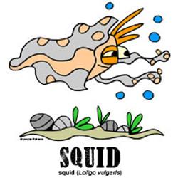 squidbylorenzo