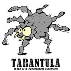 tarantulabylorenzo