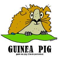 guineapigbylorenzo