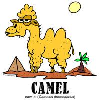 camelbylorenzo