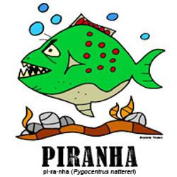 piranhabylorenzo