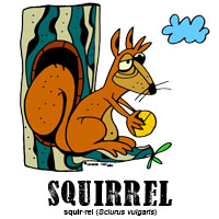 squirrelbylorenzo