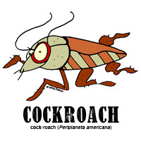 cockroachbylorenzo