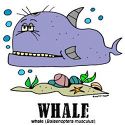 whalebylorenzo