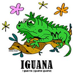 iguanabylorenzo
