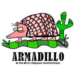 armadillobylorenzo