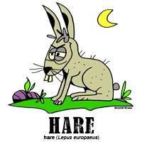 harebylorenzo