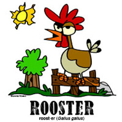 roosterbylorenzo