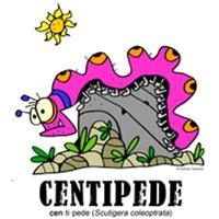 centipedebylorenzo