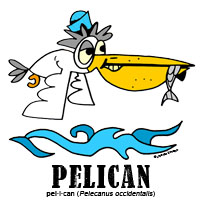 pelicanbylorenzo