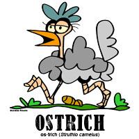 ostrichbylorenzo