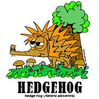 hedgehogbylorenzo